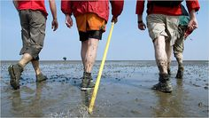 Wadlopen: walking through the Wadden Sea from Holwerd, Friesland to Ameland