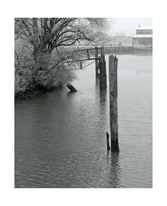 Omgeving voormalige werf de Biesbosch - foto Peter van Loon.