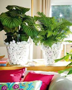 Plantas para decorar interiores