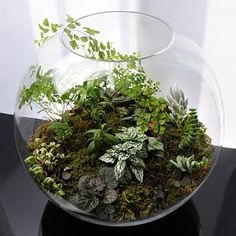 Today we look at ways to make your very own unforgettable bonsai terrarium plants. The picture Bonsai Terrarium plant here offers you a sense of the scale, and we're sure you want to have it for your home decor. Succulent Terrarium, Succulents Garden, Planting Flowers, Lizard Terrarium, Orchid Terrarium, Terrarium Centerpiece, Hanging Terrarium, Twig Terrariums, Terrarium Wedding