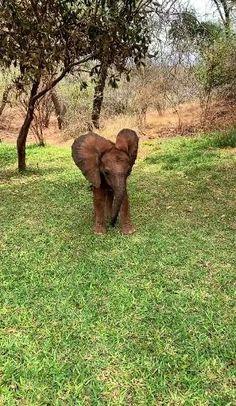 Funny Animal Photos, Cute Animal Videos, Cute Funny Animals, Cute Baby Animals, Animals And Pets, Animal Pictures, Elephant Gif, Elephant Love, Elephant Videos