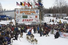 Go to the Iditarod