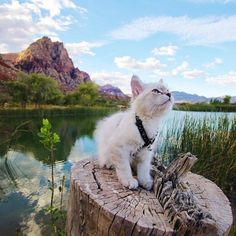 24 Adventure Cats That Enjoy The Great Outdoors