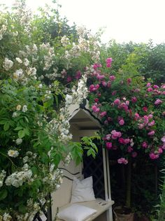Tea under the roses. Shortbread, Outdoor Living, Roses, Inspiration, Tea, Flowers, Plants, Climbing Roses, Creative Ideas