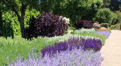 Garden And Lawn , Great Mediterranean Garden Plants : Mediterranean Garden Plants Dry Garden