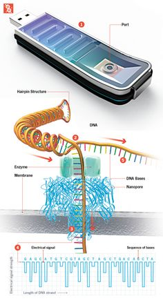 How It Works: The Fastest DNA Sequencer