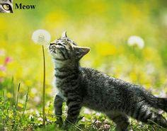 Cute kitten😻 www.youtube.com/c/WeMeow #cat #cats #wemeow #meow #catlife #cutecat #catlove #gatos #gatti #koty #katze #chats #kitty #kitten #kittens #lovecat #funnycat #catofinstagram #catsoftumblr #catstagram #instapets #instacat #pet #pets #catlover #catnature