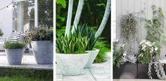 Stoere potten van beton of steen voor in de tuin