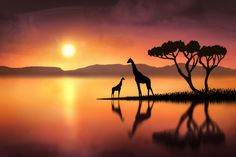 Photograph The Giraffes at Sunset by Jenny Woodward on 500px