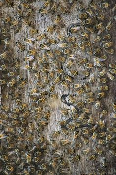 #bee #abejas