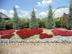 HEARTS~ @ Busch Gardens in Tampa, Florida.