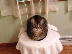 My cat just loafing around. by Zyk40 cats kitten catsonweb cute adorable funny sleepy animals nature kitty cutie ca