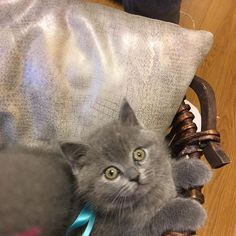Untitled Cats, Instagram Posts, Animals, Gatos, Animales, Animaux, Animal, Cat, Animais