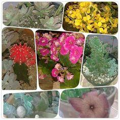 Terrarium Garden Succulents Arte Decoração JARDIM EM VIDRO