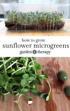 Grow sunflower micro greens at home. Use organic black oil sunflower seeds specifically labeled for sprouting or grow your own! Many people want to use the ones that are packaged as birdseed and I strongly don't recommend as they are not regulated for hum
