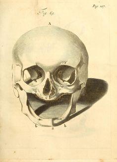 1691 - Frederici Ruyschii ... Observationum anatomico-chirurgicarum centuria : accedit catalogus rariorum ... by Ruysch, Frederik, 1638-1731