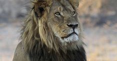 Rich Lowry: Trump is right about 'horror show' trophy hunting - The Salt Lake Tribune