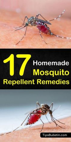 Discover how to make natural mosquito repellent using natural and non-toxic ingredients with essenti Diy Mosquito Repellent, Mosquito Spray, Natural Mosquito Repellant, Insect Repellent, Misquito Repellant, Mosquito Control, Pest Control, Bug Control, Homemade Bug Spray