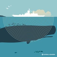 The roar beneath the waves. // Check out our latest feature on noise pollution and the impact its having on our ocean.