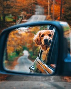 Autumn Cozy — By Kiel James Patrick Fall Pictures, Dog Pictures, Fall Dog Photos, Autumn Photos, Fall Pics, Cute Baby Animals, Animals And Pets, Cute Dogs And Puppies, Doggies