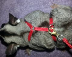"""Sugar Glider Go-Harness by MobileCritters on Etsy NEVER A GOOD IDEA: This limits their mobility because i restricts their """"flaps"""" Sugar Glider Care, Sugar Gliders, Baby Animals, Cute Animals, Sugar Bears, Flying Squirrel, Fur Babies, Human Babies, Exotic Pets"""