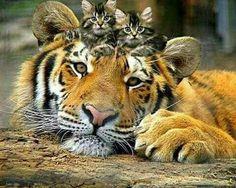 Cutie big n small cats....i wish i could hug them... aummmm...