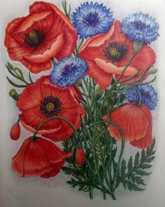 Poppies and cornflowers from The Flower Year by Leila Duly  #thefloweryear #leiladuly #prismacolorpremier #adultcoloringbook #coloringmasterpiece #coloringaddict #divasdasarts #arte_e_colorir #boracolorirtop #coloring #colouring #bayan_boyan #addictioncolour #artecomoterapia #coloring_secrets #lovecolour