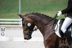 Horses for sale - Danish Wamblood Horse Lithuania Dressage For sale Constanza.