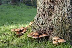 Autumn Utrecht 2015, mushrooms - Rhonda van Zijtveld