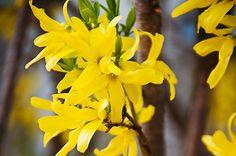 Aranyfa Gardening, Flowers, Plants, Spring, Lawn And Garden, Plant, Royal Icing Flowers, Flower, Florals