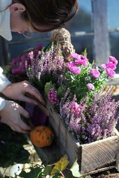 Gypsy Purple home. tinywhitedaisies: (via Wall Photos) Fall Containers, Succulents In Containers, Container Plants, Container Gardening, Purple Home, Balcony Plants, Garden Planters, Autumn Inspiration, Garden Inspiration