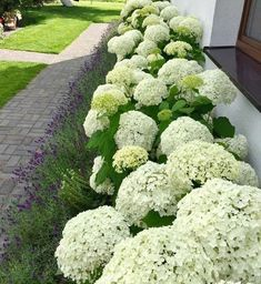Back Gardens, Small Gardens, Landscape Design, Garden Design, Weed Seeds, Special Flowers, Front Yard Landscaping, Landscaping Ideas, Backyard Ideas
