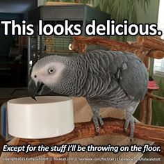 There's no getting around food bowl modifications. It's okay, it's not your fault you're confused.