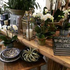 Indigo! Orchids, air plants, moroccan pottery. Indigo Books
