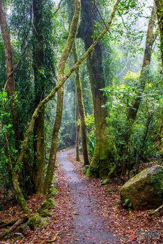 Twin Falls Walk in Springbrook National Park, Gold Coast Hinterland, Australia