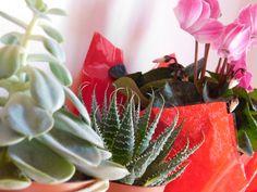 Plants and colour