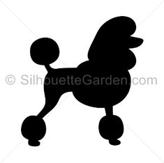 Poodle silhouette clip art. Download free versions of the image in EPS, JPG, PDF, PNG, and SVG formats at http://silhouettegarden.com/download/poodle-silhouette/