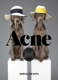Acne Borsalino hats