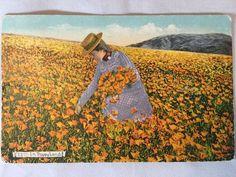 Vintage Orange California Poppyland Poppy Field postcard postmarked 1910