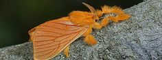 . Beautiful Bugs, Amazing Facts, Fun Facts, Earth, Animals, Butterflies, Mexican, Insects, Animales