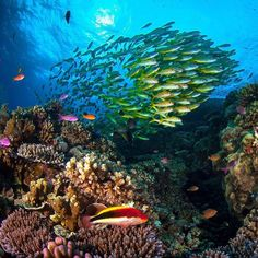 """The Great Barrier Reef in Queensland May 19th 2016. The Reef is a World Heritage site but some scientists report that it could be beyond saving within five years without """"now or never"""" funding to improve water quality. Credit: AFP/James Cook University/Matt Curnock #greatbarrierreef #Australia #fish #reef #environment #nature by theeconomist http://ift.tt/1UokkV2"""
