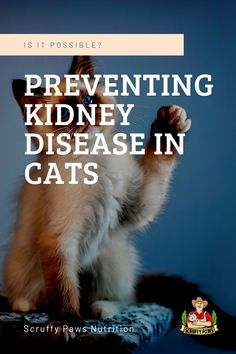 Cat parents, did you know kidney disease affects 1 in 3 cats over the age of 10? Check out our article where we dive deep on how you can support your cats health, special tips, tricks and food you can give your kitty to keep their kidneys healthy. Cat Health Care, Health Tips, Baby Cats, Cats And Kittens, Healthy Cat Food, Cool Cat Toys, Cat Diet, Silly Cats, Sphynx Cat