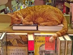 The Library Cat who likes books