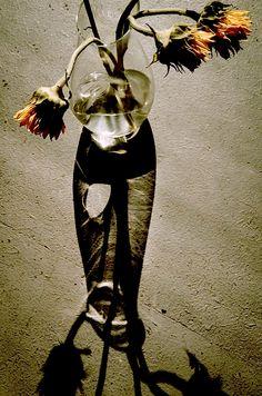 glovaskicom:  Sunflower #6, Glovaski 2015