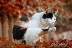 Katzenyoga im Herbstlaub by Nicole Kammerer on 500px