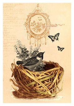Bird vintage