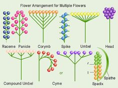How to identify plant families (not for the beginner)