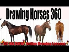 How to DRAW a horse from Different views (More Advanced) - YouTube
