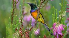 Kolorowy, Ptak, Kwiaty