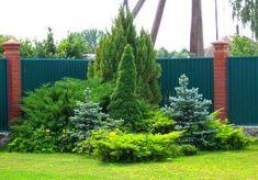 Обустраивая свой участок, садовод должен знать всё о клумбах, которые он хочет создать. Если решение в пользу хвойников, то полезно будет узнать об особенностях клумб из хвойных растений.